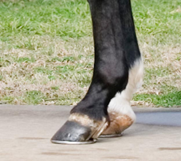 Well maintained hooves