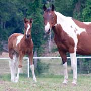 Breaking Up Is Hard To Do, Learn how to successfully wean your foals
